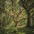 Des arbres et des hommes |